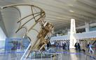 Le ali di Leonardo. Il genio e il volo